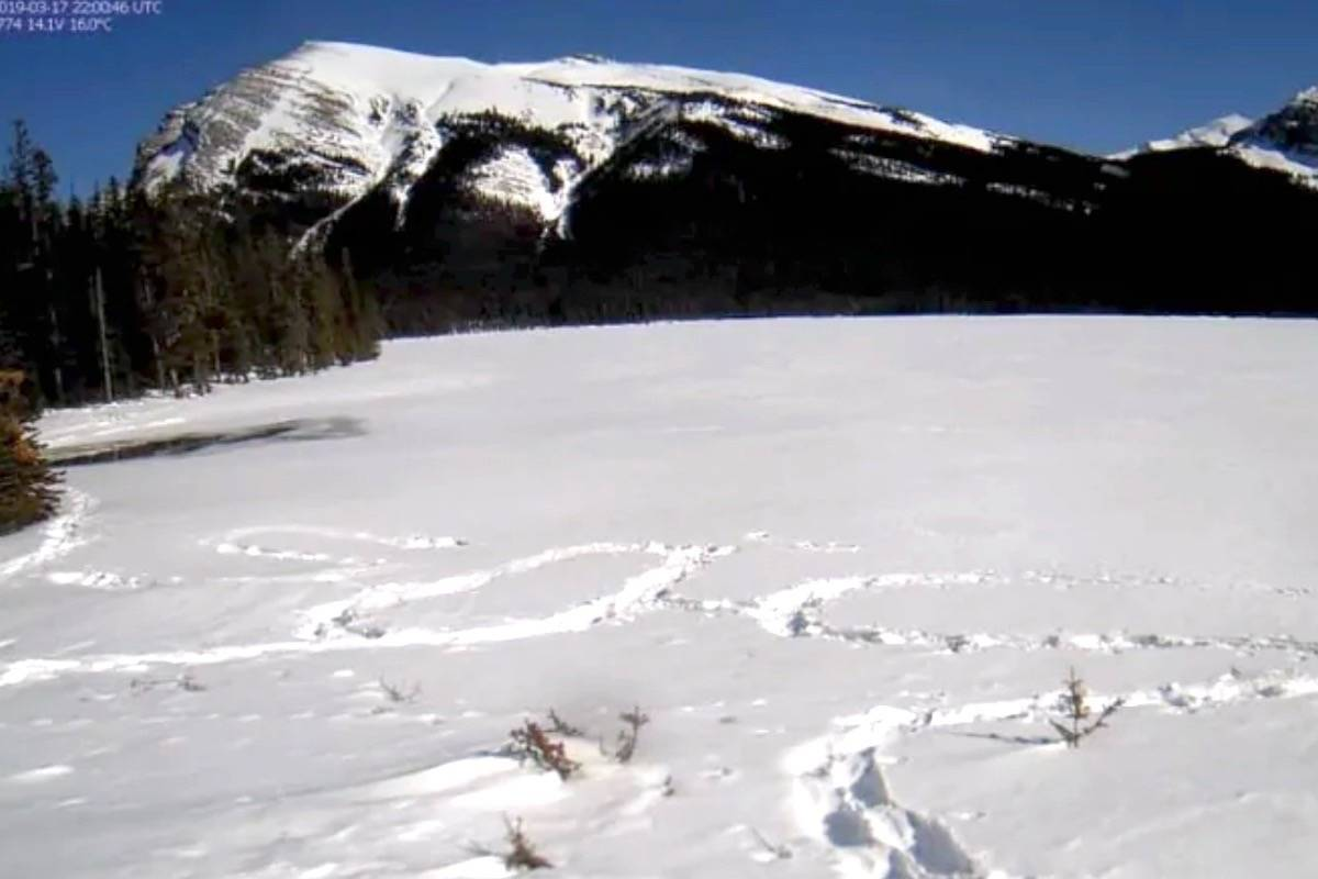 Hiker rescued after stomping SOS into snow in front of B C