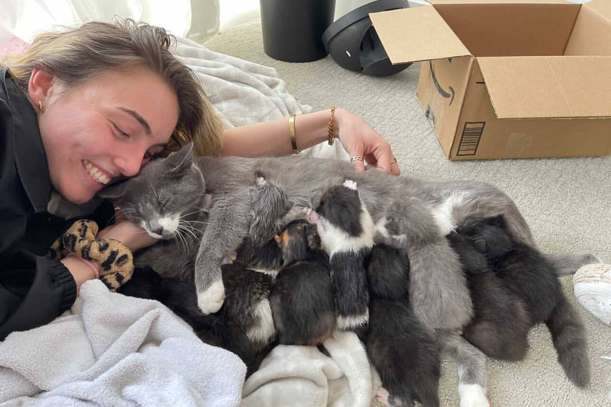 4 Cats Abbotsford