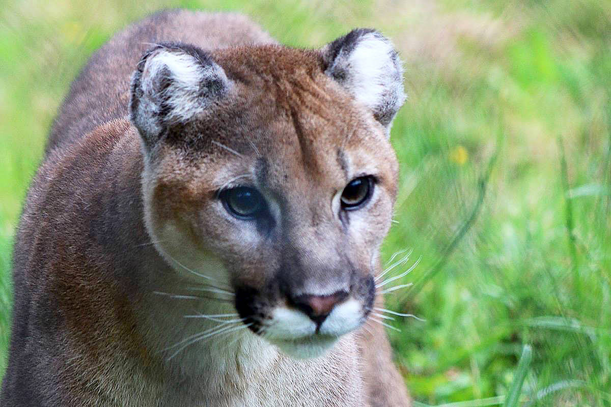Where can i find a cougar woman